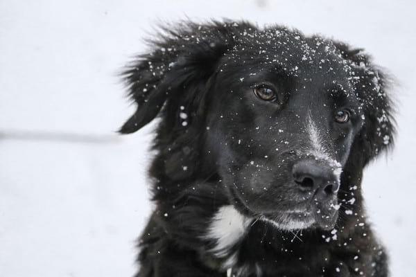 Pielęgnacja czworonogów zimą