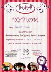 Certyfikat Groomera