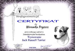 Certyfikat Trymowanie rasy Jack Russell Terrier
