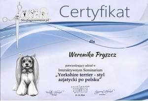 Certyfikat styl azjatycki po polskuiu rasy Yorkshire terrier