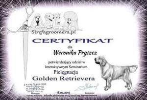 Certyfikat Pielęgnacji rasy Golden Retriever